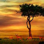 Sydafrika - de 5 måske mest uventede oplevelser